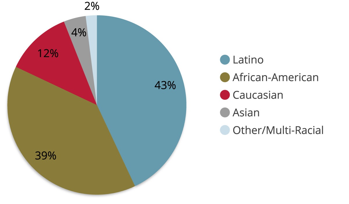 An illustrated pie chart depicting the race & ethnicity breakdown